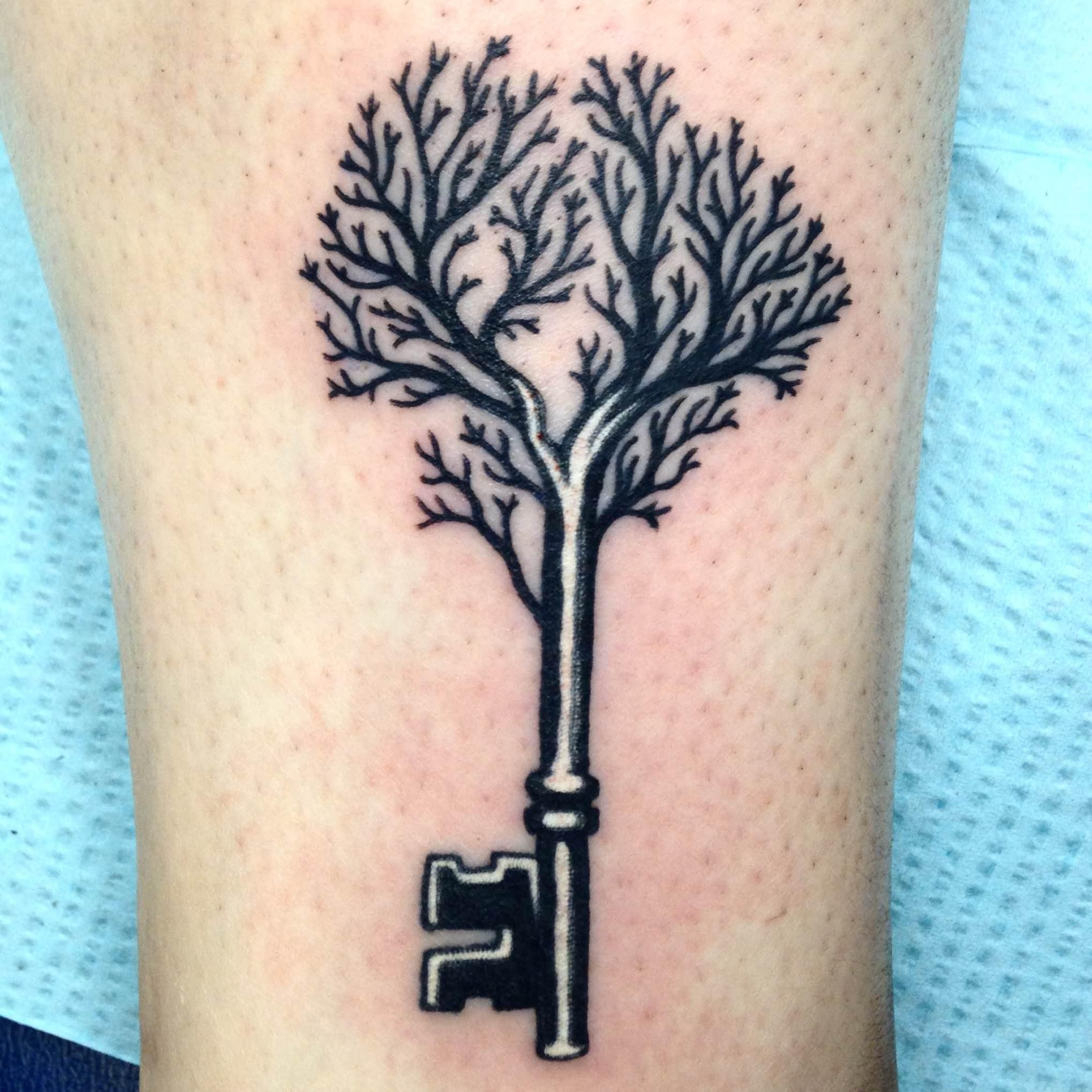 cypress3